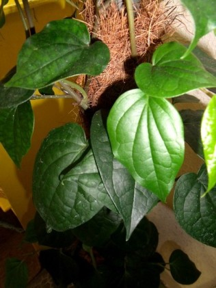 la plante mystère cpce2 ecolesaintpierre (1)