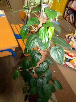 la plante mystère cpce2 ecolesaintpierre (2)