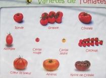Quelques variétés de tomates